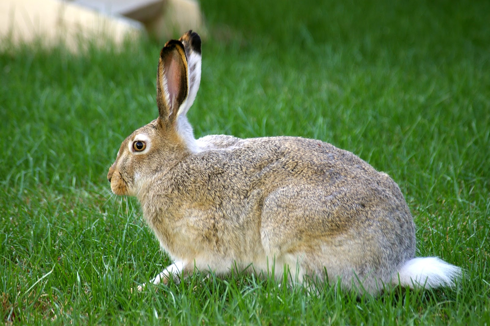 Find a solution to your rabbit control problem.